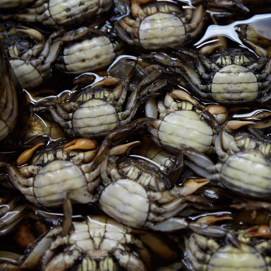 mercado_tailandia_cangrejos