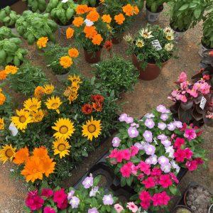 flores_ibiza